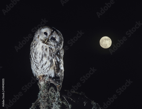 Owl perching on tree