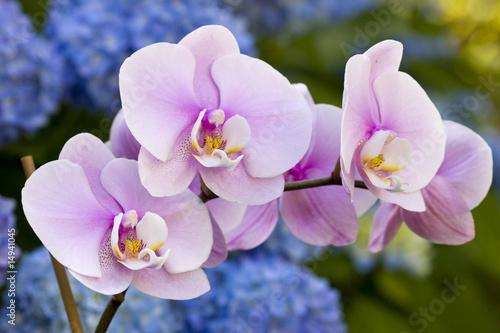 rozowe-kwiaty-orchidei
