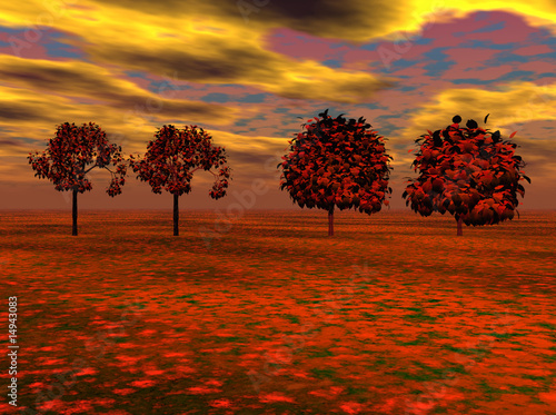Maple Trees at Sunset