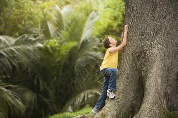 Boy Climbing Large Tree