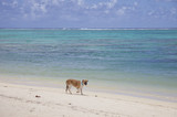 Dog with lifting Paw on Tropical Beach poster