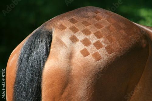 Foto op Plexiglas Paardrijden croupe,cuisse,damier,échec,