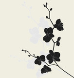 Fototapety Stylized orchid branch, vector illustration