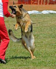 dog assault