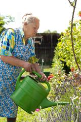 Ältere Frau giesst ihre Blumen