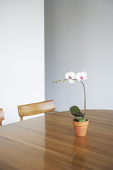 Potted flower on table