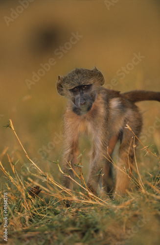 Monkey in grass