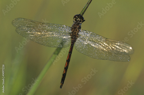 Dragonfly, close-up