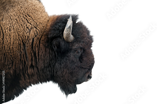 Aluminium Buffel American Bison in Yellowstone National Park isolated on white