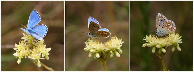 Décomposition de l'envol d'un papillon