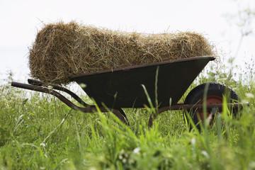 Hay bale on wheelbarrow in field