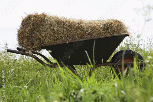 Hay bale on wheelbarrow in field