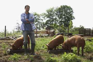 Man feeding pigs in sty, portrait