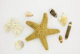 étoile et coquillages