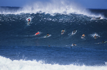 Surfers paddling out to catch wave