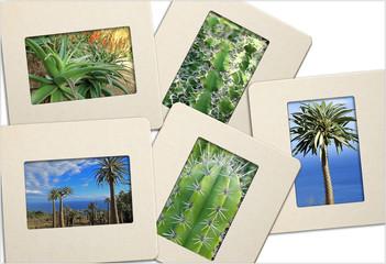 diapositives de plantes grasses