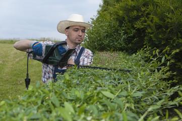 Gärtner, Mann schneidet Hecke mit elektro-Heckenschere