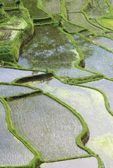Rice paddies, elevated view