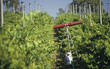 Gas gun in vineyard for deterring birds