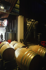 Wine barrels in winery, Yarra Valley, Victoria,Austalia
