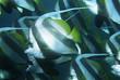 Mozambique, Indian Ocean, school of coachman fish Heniochus acuminatus, close-up
