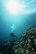 Raja Ampat, Indonesia, Pacific Ocean, scuba diver in shallows with rays of light streaming from surface