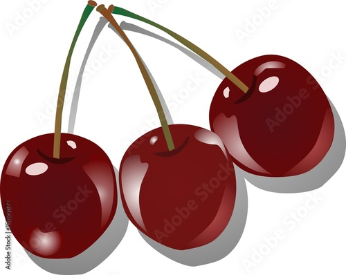 Three succulent cherries in an illustration