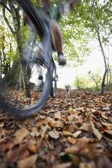 Dog chasing person on mountain bike through woodland