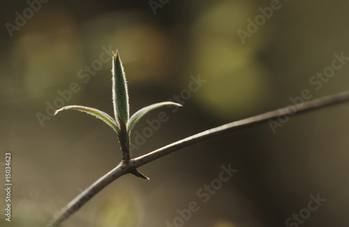 Close-up of bud on twig