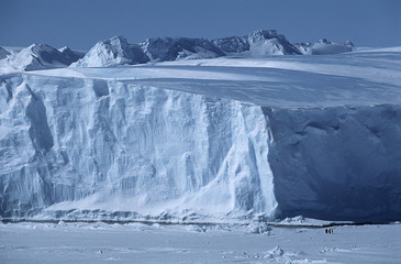 antarctica weddell sea riiser larsen ice shelf iceberg with emperor penguins