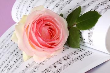 Rosa Rose und Musiknoten