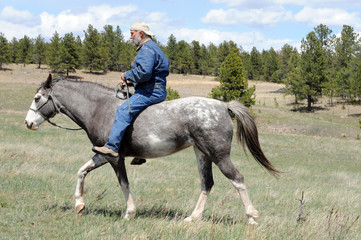 natural horsemanship Spanish Mustang