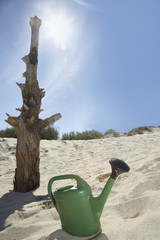 Watering can near dead tree trunk on sand dune