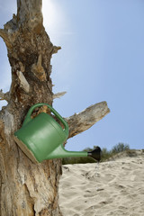 Watering can hanging on dead tree trunk on sand dune