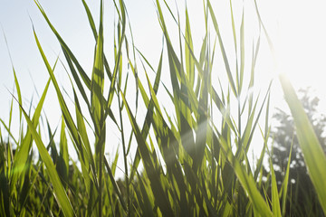 Close-up of grass in field on sunny day