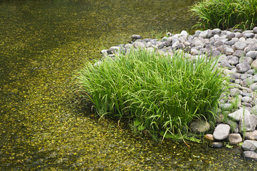 Japan, Himeji, Himeji Koko-en Gardens, stream, close-up
