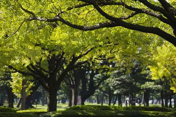 Japan, Tokyo, Marunouchi business district, park