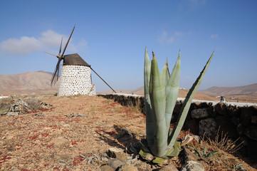 Aloe Vera and Windmill on Canary Island Fuerteventura Spain