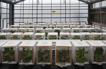 Rows of plants in boxes in greenhouse
