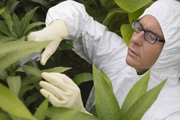 Worker in protective suit measuring plants