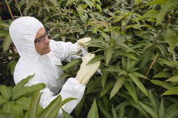 Worker in protective suit measuring plants, elevated view