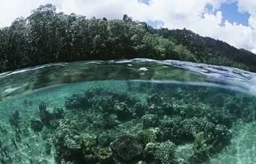 View of underwater scene and surface level view