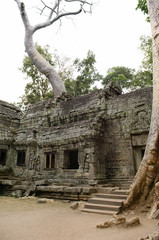 Tree Growing from Roof of Ancient Temple