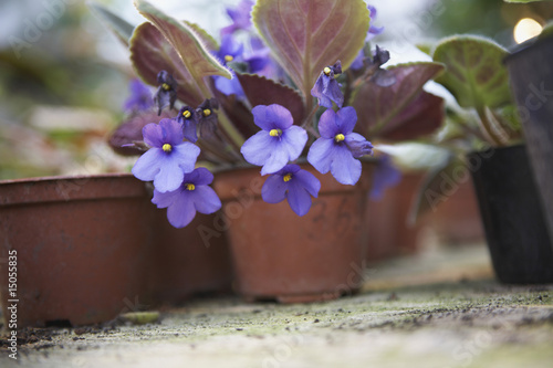 Potted Plant in Flower
