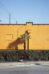 palm tree and hedge beside a yellow wall