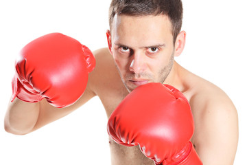 Boxer in action isolated on white background