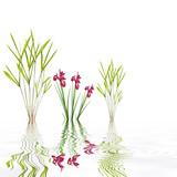 Zen Garden Simplicity poster