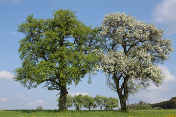 Bäume im Frühling