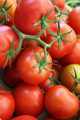 Grappe de tomates au marché