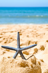 Starfish In Sandcastle